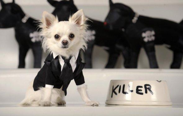 Стильная одежда для собак (38
